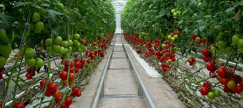 Greenhouse Tunnels Gauteng