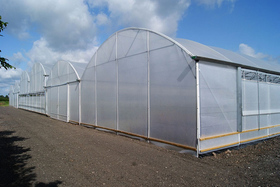 greenhouse tunnels Limpopo
