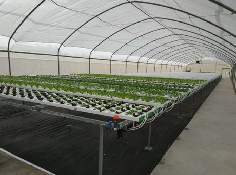hydroponic greenhouses